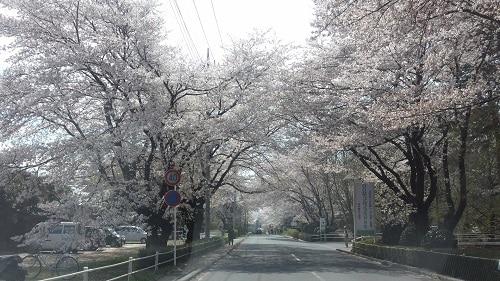 桜アーケード0958