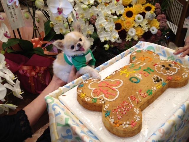 犬ごころ_カルビちゃんとケーキ